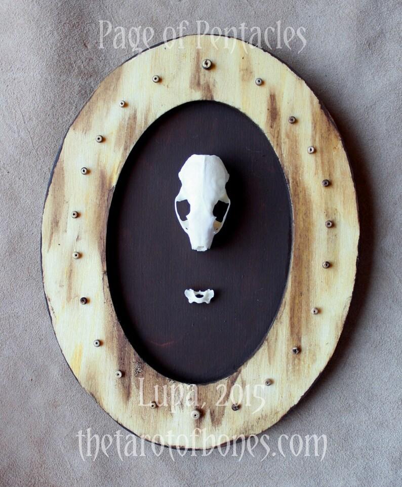 Page of Pentacles - Tarot of Bones original assemblage - real mink skull  OOAK