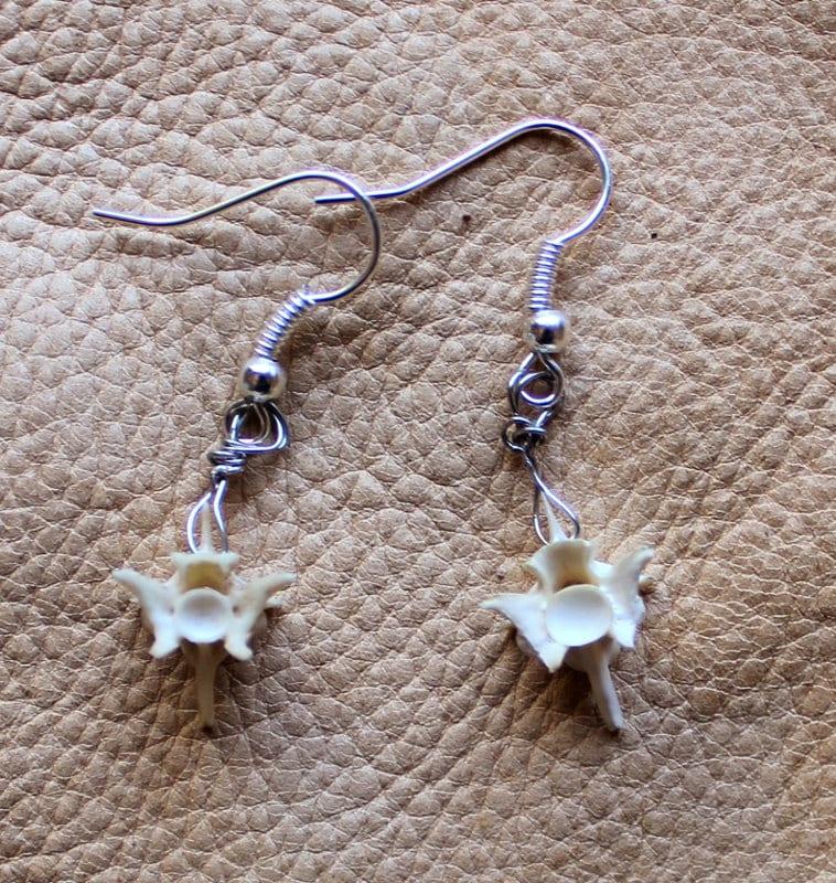 Fully articulated real snake vertebrae spine gold earrings This pair 4 real vertebrae versus 6