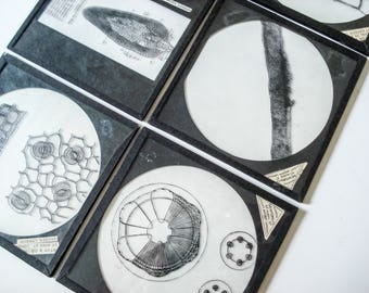 Set of 6 Magic Lantern glass slides with a cellular botany theme