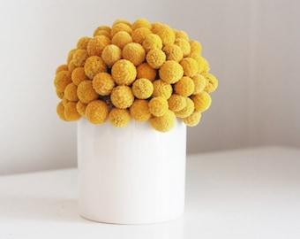 craspedia cluster in white  |  modern dried flower arrangement, billy button, billy ball design