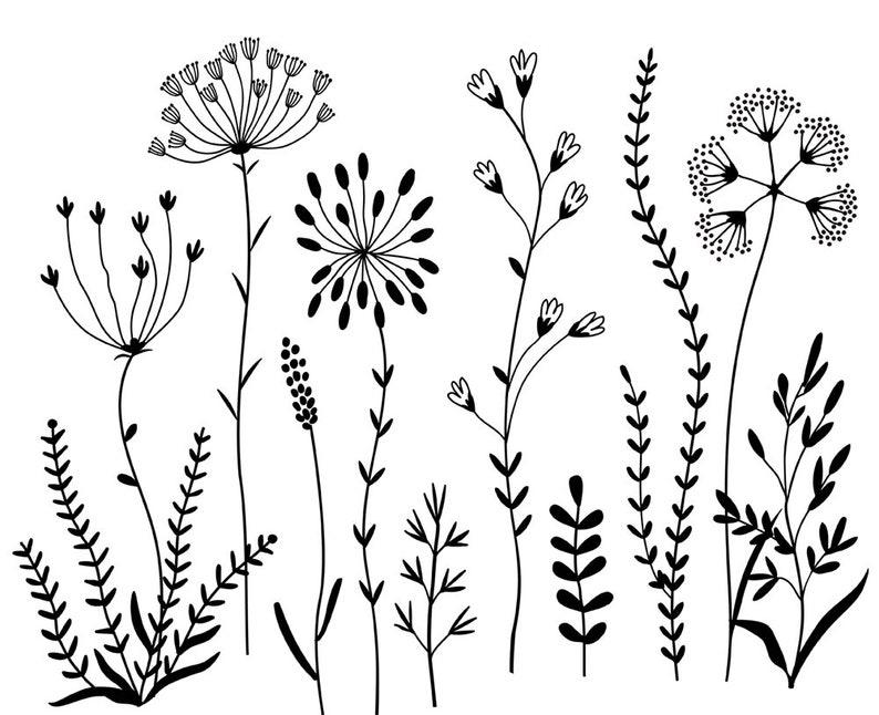 сломанное картинки контуры полевых цветов разгар