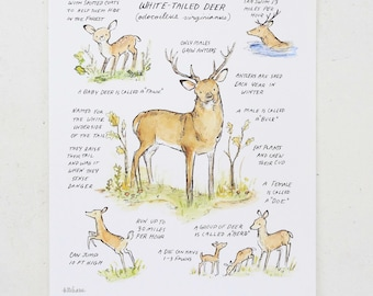 Woodland nursery, forest art, Woodland Guide White Tailed Deer, giclée print, Kit Chase artwork, 5x7, 8x10, 11x14