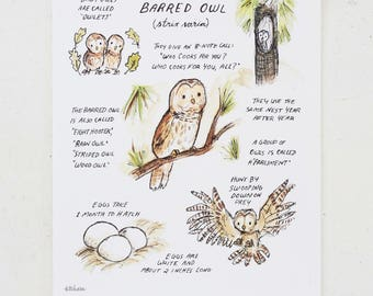 Woodland nursery, forest art, Woodland Guide Barred Owl, giclée print, Kit Chase artwork, 5x7, 8x10, 11x14