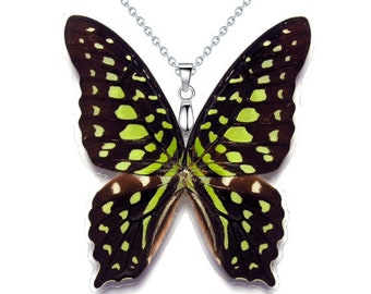 Real Butterfly Wing Necklace / Pendant (WHOLE Graphium Agamemnon - W059)
