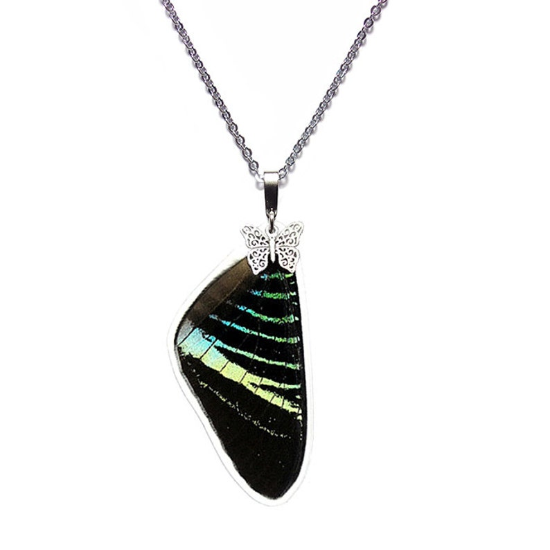 Real Butterfly Wing Pendant  Necklace Urania Leilus Forewing - N033 Buy 2 Get 1 Free