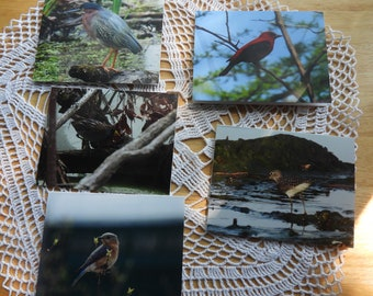 Five Blank Cards with Seller's Photography on the Front of Each Card