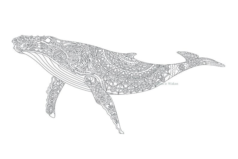 photograph relating to Whale Templates Printable identify Grownup Coloring Website page - Whale Coloring Print, Downloadable Whale for Coloring, Printable Coloring Doodle