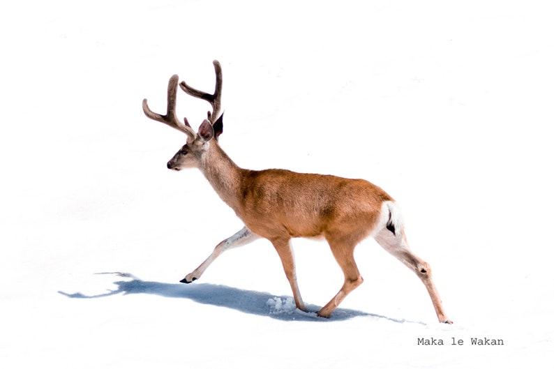 Woodland Animal Minimal Modern Photo Printable Wall Art Deer Print