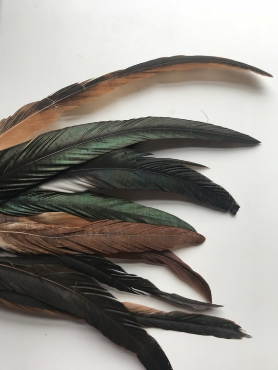 Half bronze natural brown long iridescent rooster coque tail feathers real 20