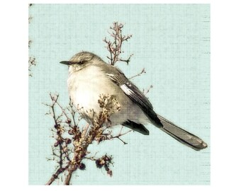 Bird Photograph Mockingbird Vintage Style -Shabby Chic Nature Wildlife Aqua Blue Branch