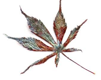 Leaf Photograph Painted Maple Minimalist Fine Art Nature