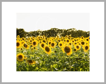 "8x10 Matted Print of ""Sunning the Sunflowers"""