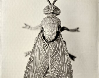 Tintype - Fly in mat