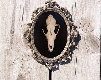 Tintype - Coyote Skull
