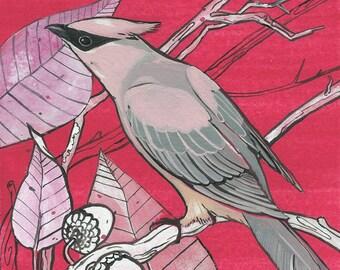 "Cedar Waxwing - bird art print, 6"" x 6"""