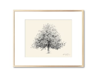 Magnolia Tree Drawing - Fine Art Print - Nature Inspired Art - Botanical Wall Art - Unique Gift - Technical Drawing - Southern Decor