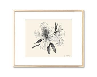 Azalea Flower Blossom Botanical Print - Floral Wall Art - Southern Decor - Lowcountry Art Giclee Print - Nature Lover Gift - 5x7 8x10 11x14