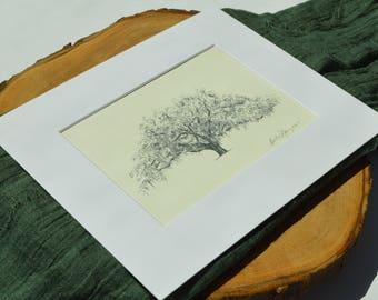 Candler Oak Tree Print - Savannah, Georgia - Fine Art Print - Pen and Ink Drawing - Local Savannah Artist Heather L. Young - Nature Art