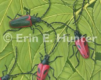 Valley Elderberry Longhorn Beetle and Blue Elderberry
