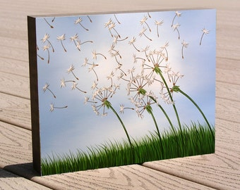 """Dandelion 8 x 10 art print mounted to cradled birch panel, ready to hang, """"Wishing"""" by Amy Giacomelli, Christmas or birthday gift idea"""