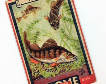 Boy Scout Collector Card, Some Boy Chewing Gum, The Goudey Gum Co, The Yellow Perch 1933