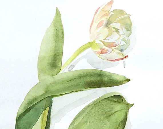 Watercolor flower painting-White Tulip blush petals- original by Gretchen Kelly