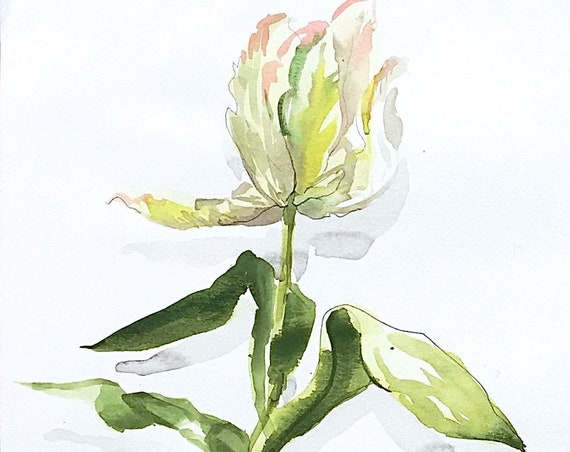 Watercolor flower painting-White Tulip Standing Straight- original by Gretchen Kelly