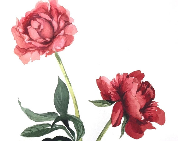 Original watercolor painting of soft Pink Peony by Gretchen Kelly