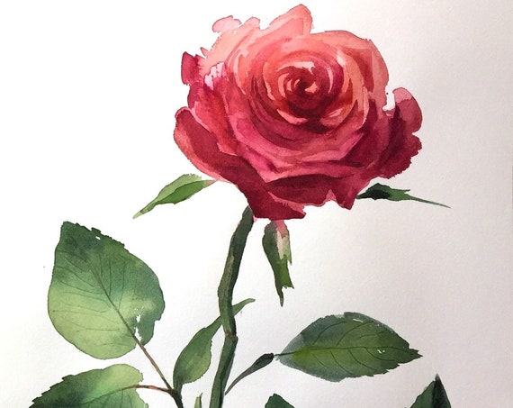 Original watercolor painting of Deep Pink Rose by Gretchen Kelly