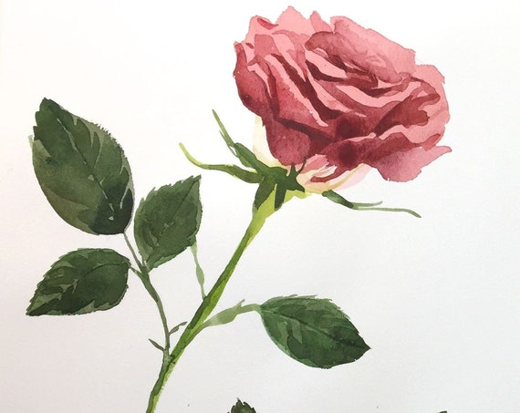 Original watercolor painting of Soft Rose by Gretchen Kelly