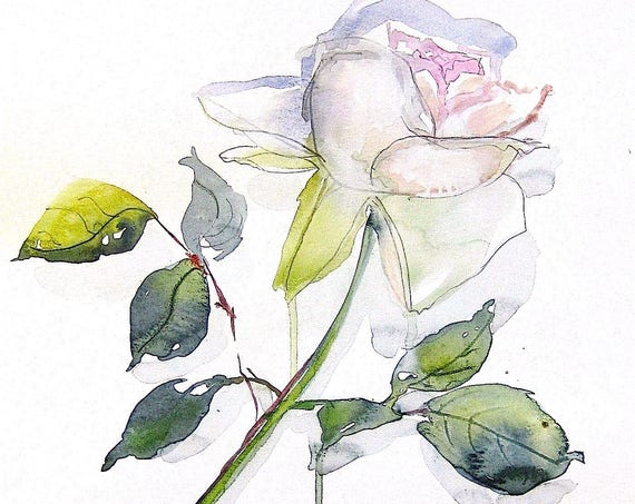 Watercolor flower painting-White Rose- original by Gretchen Kelly