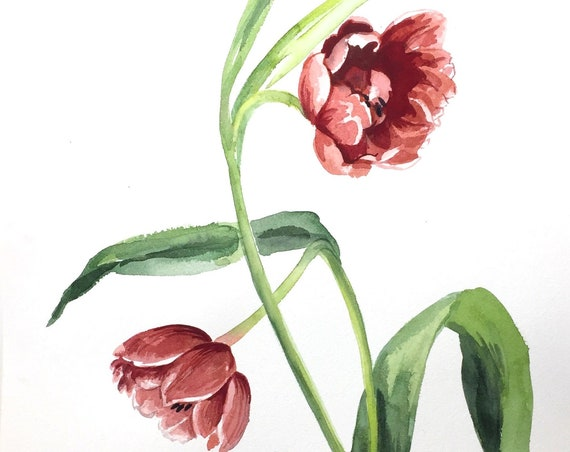 Original watercolor painting of Two Tulips by Gretchen Kelly