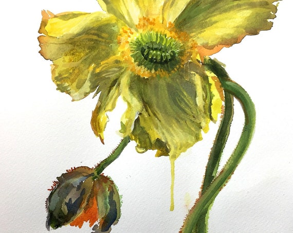 Watercolor flower painting-Yellow Poppy- original art and prints by Gretchen Kelly