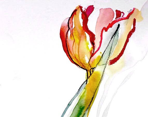 Watercolor painting -Parrot Tulip-original botanical study