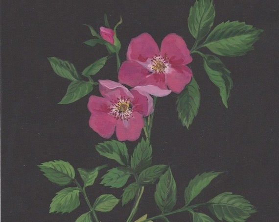 Botanical original painting of the Dog Rose plant