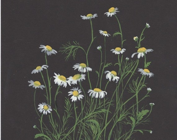 Botanical original painting of Chamomile plant