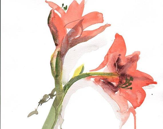 Original floral watercolor painting -Orange Amarylis