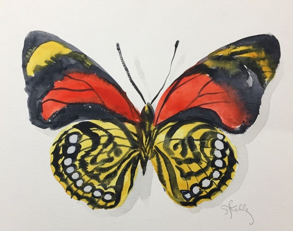 Original Watercolor painting of White Spotted Agrias Butterfly