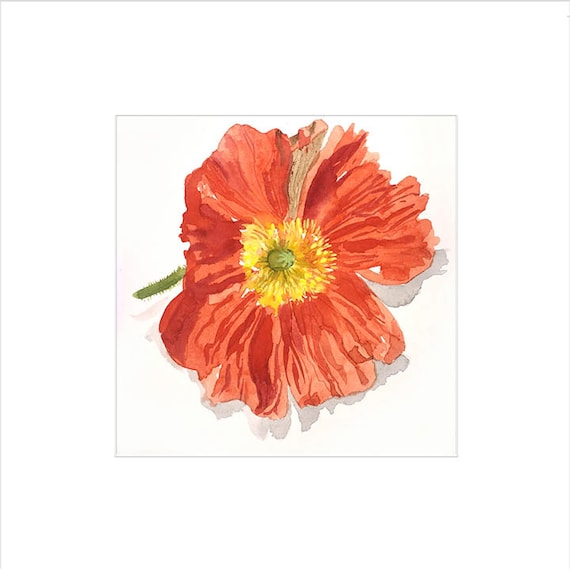 Watercolor flower painting-Bright Poppy- original by Gretchen Kelly