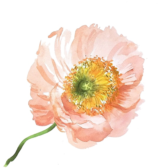 Giclee print of Coral Poppy from original watercolor painting
