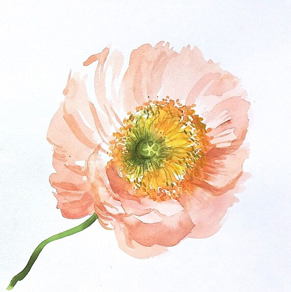 Original floral watercolor painting -Light Coral Poppy