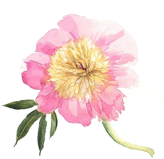 Giclee print of Light Pink Peony from original watercolor painting