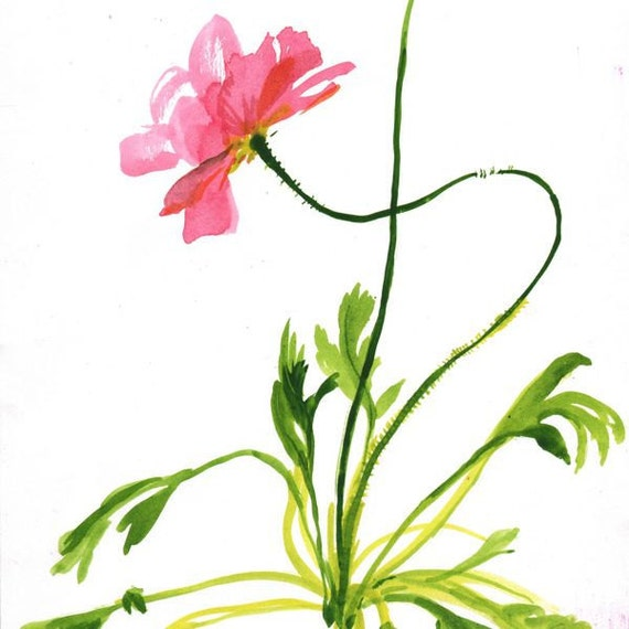 Original watercolor painting -Coral Poppy