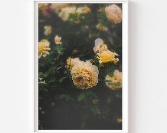 Rose Photograph, Yellow rose print, English Roses Photo, Botanical Wall Art, Yellow Green Wall Art, Yellow Flowers Photo, Floral Wall Art