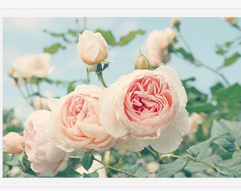Nature Photography, English Roses Photo, Nursery Print, Pale Pastel Roses, Pink Wall Art, Feminine Home Decor, Roses Wall Art, Garden Print