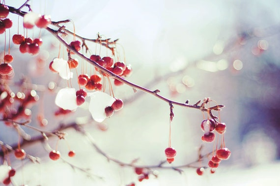 Red Berries Photo Winter Photography Snow On Branches Red Etsy