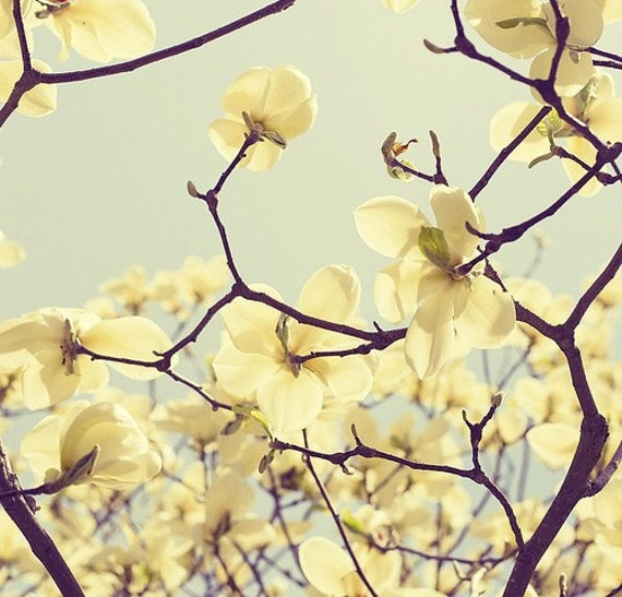 Magnolia Photo Spring Blossom Yellow Flowering Tree Branches Etsy