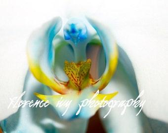 Orchid Macro Fine Art Photo Print Metallic Paper