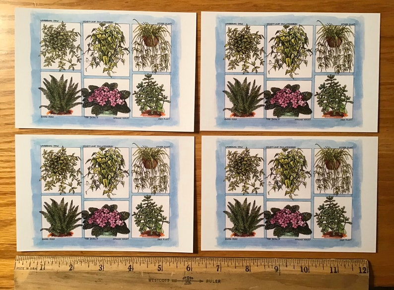 Houseplant postcards set of 4 colored postcards on sturdy white cardstock featuring six popular plants drawn by LC DeVona