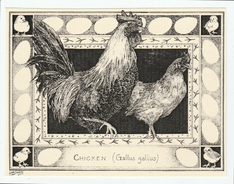 Chicken-This 6-pack of blank ivory cards with matching image 0